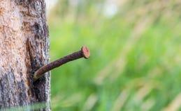 在老木头的生锈的钉子 免版税库存图片