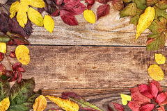 在老木头的秋叶 免版税库存图片