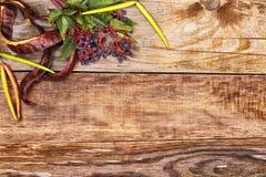 在老木头的秋叶 免版税图库摄影