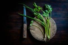 在老木头的绿色香菜 库存照片
