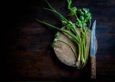在老木头的绿色香菜 免版税库存图片