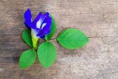 在老木头的紫色仙人掌花 库存图片