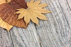 在老木backgrou的凋枯的秋季黄色和棕色叶子 库存图片