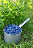 在老杓子的Honeyberry在三叶草垂直 免版税库存照片