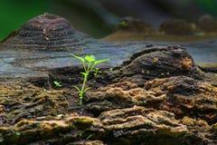 在老树干的新的植物生长 免版税库存照片