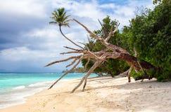 在老树的吊床在海滩 免版税库存图片