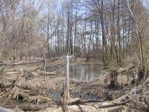 在老河床Bezhka的木桥 免版税库存图片