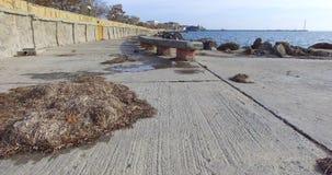 在老波摩莱的堤防的干燥海藻在秋天,保加利亚 免版税库存图片
