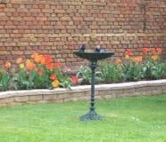 在老牌的鸟浴与在郁金香花堆前面的脚立场毗邻与砂岩墙壁 图库摄影