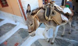 在老石台阶的传统驴在希腊海岛 库存图片