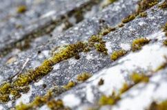 在老石棉板岩的青苔 免版税库存照片