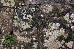 在老石头的地衣 免版税图库摄影