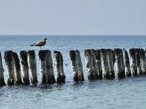 在老码头的海鸥 免版税库存照片