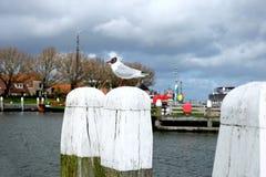 在老码头的海鸥 免版税库存图片