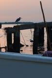 在老码头的苍鹭 免版税库存图片