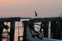 在老码头的苍鹭 图库摄影