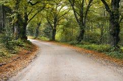 在老秋季橡木之中的乡下公路 免版税图库摄影