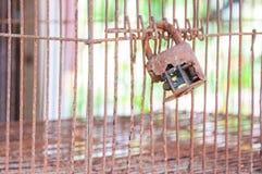 在老笼子的老锁 库存图片
