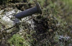 在老篱芭的生锈的钉子 库存图片