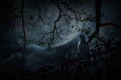 在老篱芭的鸟立场在死的树、月亮和多云天空, Mys 库存图片