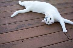 在老红色甲板的白色猫laydown 库存照片