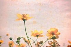 在老纸的葡萄酒黄色花 免版税库存图片