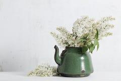 在老茶壶的白色丁香在白色背景 免版税库存照片