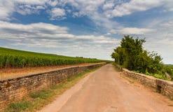 在老葡萄园之间的乡下公路伯根地的 免版税库存照片