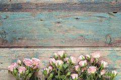 在老蓝色木板的小桃红色玫瑰 文本的空间 库存图片