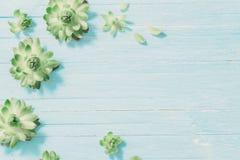 在老蓝色木背景的多汁植物 库存照片
