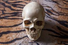 在老虎皮肤图象的头骨 免版税库存照片