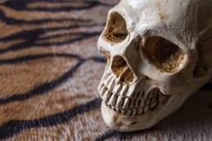 在老虎皮肤图象的头骨 免版税库存图片