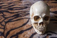 在老虎皮肤图象的头骨 库存图片