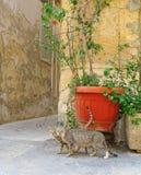 在老街道的逗人喜爱的猫 免版税库存照片