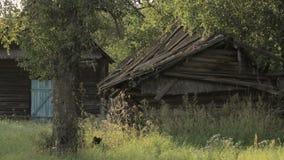 在老被毁坏的被放弃的木房子的静态看法在白俄罗斯的村庄 股票视频