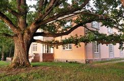 在老豪宅附近的巨大的橡树 库存照片