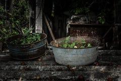 在老金属生锈的碗的杂草 库存照片