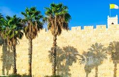 ??? ???? 在老镇的墙壁的三棵棕榈树 免版税图库摄影