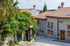 在老镇街道上的开花的植物在罗维尼Istria克罗地亚 免版税库存图片