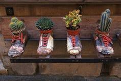在老鞋子的装饰花盆 库存照片