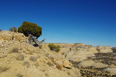 在老鹰峡谷,犹他附近的风景 免版税图库摄影