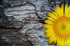在老织地不很细木地板背景的黄色向日葵 免版税图库摄影