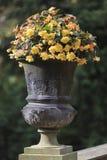 在老黑暗的杯子的黄色绽放 免版税图库摄影