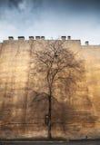 在老黄色墙壁背景的老不生叶的树 图库摄影