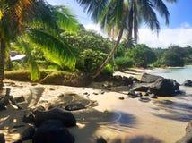 在考艾岛夏威夷海岛上的阿尼尼海滩  库存照片