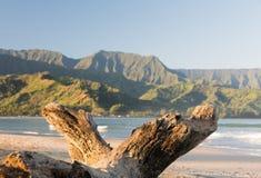 在考艾岛海岛上的Hanalei海湾  库存图片