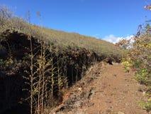 在考艾岛海岛,夏威夷上的Waimea峡谷 免版税图库摄影