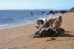 在考艾岛的漂流木头 库存图片