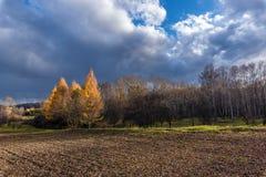 在耕地边缘的秋天树 库存图片