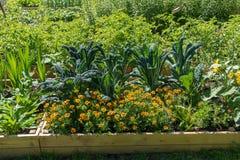 在耕种箱子的绿色食物在庭院里 库存照片